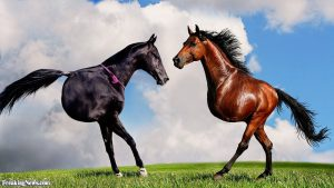 mutant-horses-with-two-legs-123241